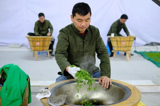圖為:多位炒茶選手在炒制龍井茶。  張洋 攝