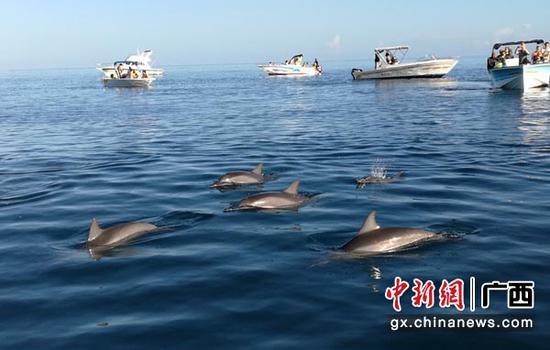 圖為欽州三娘灣海豚。主辦方供圖