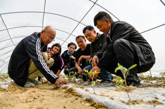 在新疆巴州尉犁縣墩闊坦鄉霍爾加村田園觀光綜合體項目生產拱棚區,巴州林業技術推廣中心高級工程師楊保國為村民講解葡萄、采摘蔬菜的立體間套種技術要點。 李飛 攝
