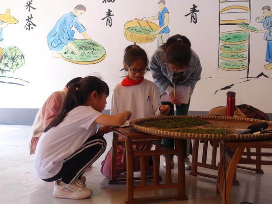 學生觀察茶葉鮮葉。  錢晨菲 攝