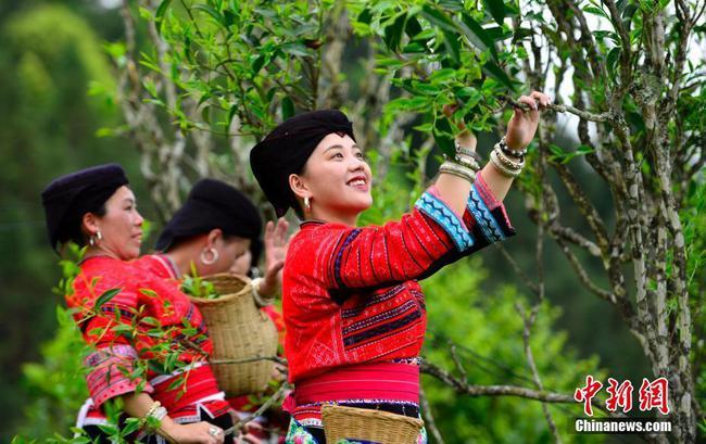 开户送体验金龙胜瑶族民众欢庆古树茶文化节