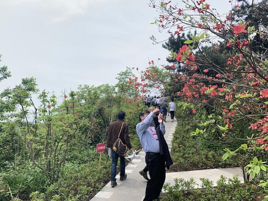 浙江磐安举办杜鹃花节  掘金赏花经济助力乡村振兴
