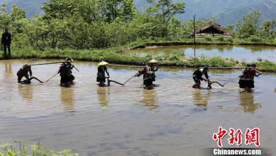 广西苗族民众举行开耕仪式 祈求五谷丰登