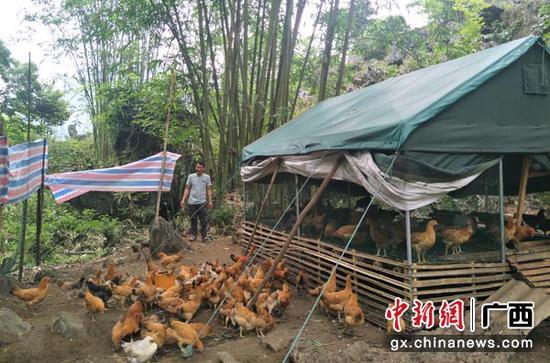 图为卢金田养殖鸡棚。
