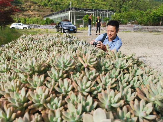 图为:一名华文媒体记者在拍摄多肉植物。  张茵 摄