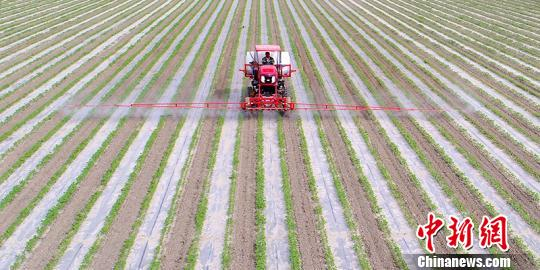 """与传统植保机相比,""""智能农机""""具有喷药、施肥等多种功能,有效喷洒宽幅达19米。 杜炳勋 摄"""