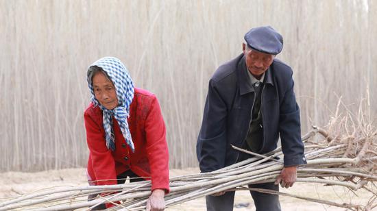 活人不能让沙子欺负!新疆一对夫妇35年种树80万棵