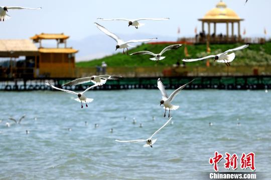 中国最大内陆淡水湖——博斯腾湖第十一届开湖季正式启动