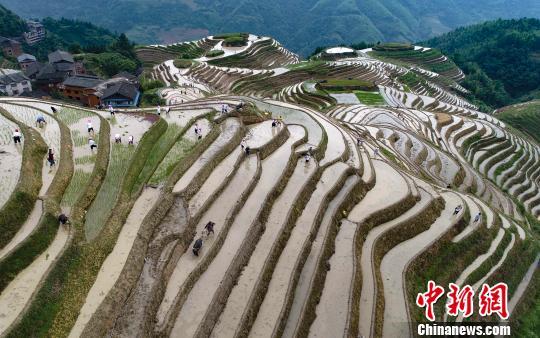 廣西龍勝舉辦傳統梳秧節