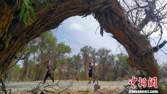 穿越胡杨林、沙漠、戈壁……新疆轮台上演骑行、徒步大赛