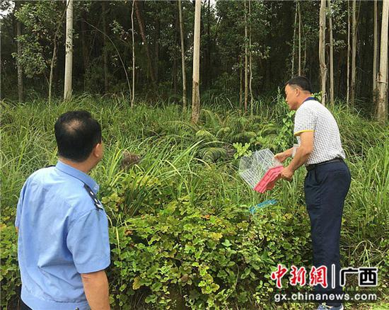 民警与野生动物保护部门一起将猫头鹰放归大自然。