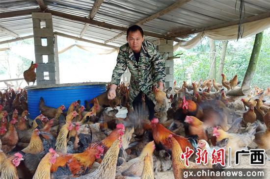 贾英锋在基地储藏玉米粮仓里拿玉米,食肉鸡哄抢。