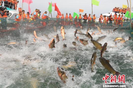 新疆博斯腾湖开湖捕鱼 开启夏季旅游热潮