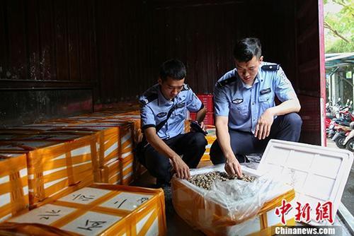 桂粵海關打掉特大走私海產品團伙 涉案案值2億元