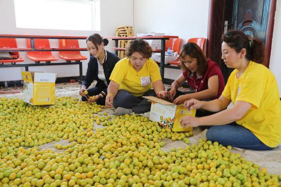 工作隊幫助村民包裝小白杏。