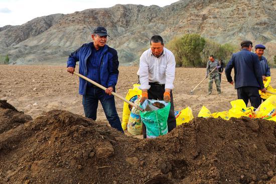 图为阿斯甫·玉努斯(右)正在和伊吾县苇子峡乡阿依塔克养殖农民合作社的工人们一起劳作。