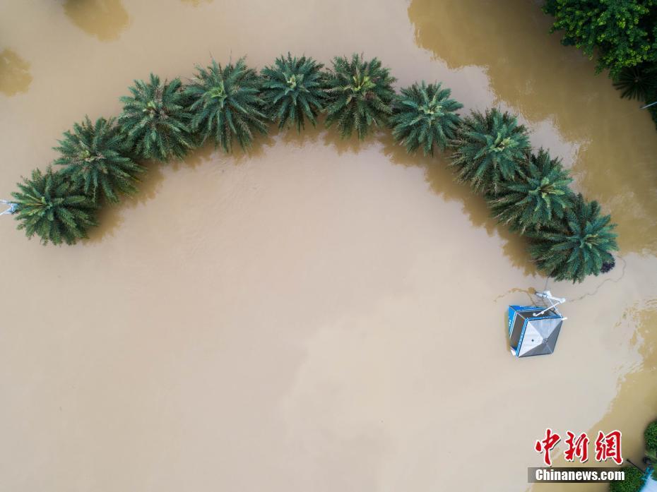广西柳州市一周内遭3次洪峰 公园只剩下树干露出