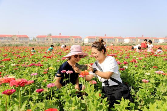新疆博湖县花海世界繁花盛开吸引众多游客