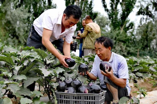 且末县:庭院经济引领村民脱贫致富