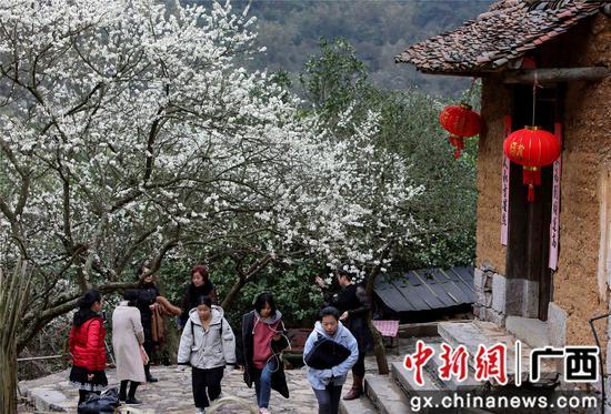 资料图:2月28日,游客在铜板屯赏花游玩。覃庆和 摄