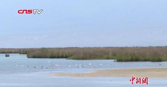 新疆艾比湖濕地再現生機:野生鳥類增加至200萬只