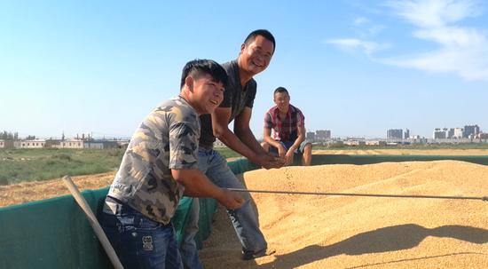 焉耆县6.5万亩富硒小麦喜获丰收