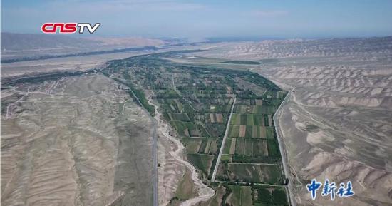 新疆農民發明無灌溉造林技術 專利無償公開
