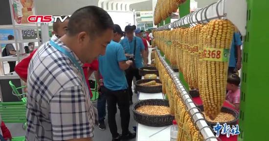 """新疆种交会""""三展""""联合 1393个农作物良种供农民挑选"""