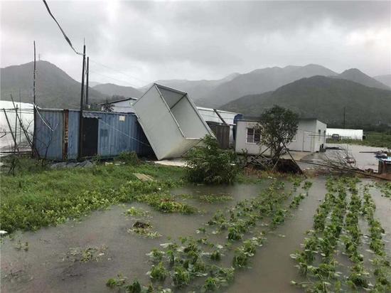 图为农作物被淹  象山县三防办供图