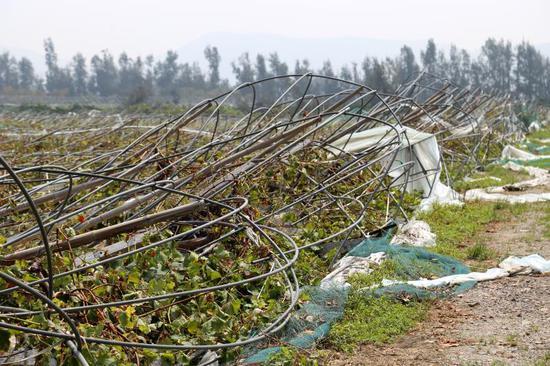 图为:13日,浙江省温岭市城南镇多处农田受灾后的场景 金云国 摄