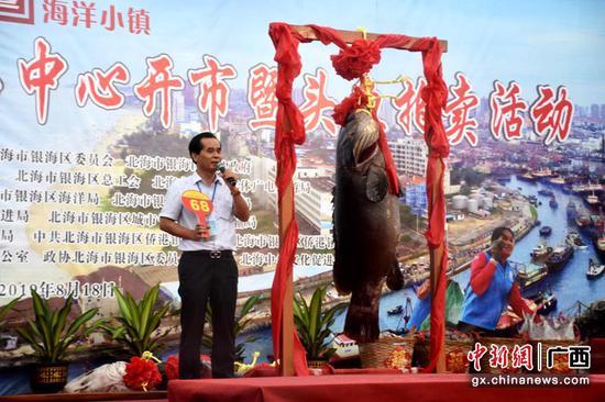 """广西北海91公斤""""鱼王""""拍出70万元"""