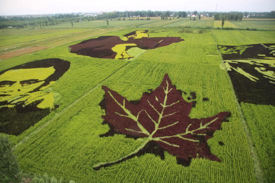 稻田里想画像。