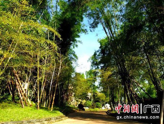 图为青秀山新东区景观——竹园小径。赖有光 摄
