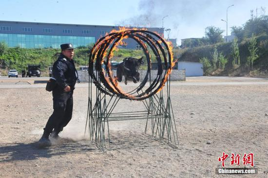 """新疆边检总站举行警�犬""""大比武"""""""