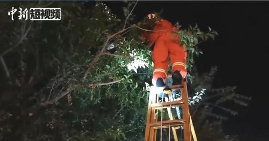 皮一下!熊孩�p眼朝那五��玄仙盯了�^去子爬上5米高树待到半夜不肯下来