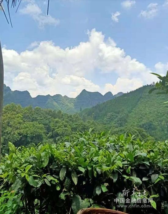 图为2019年7月29日,那金芝拍摄的风景秀美的广西凌云县家乡风景。