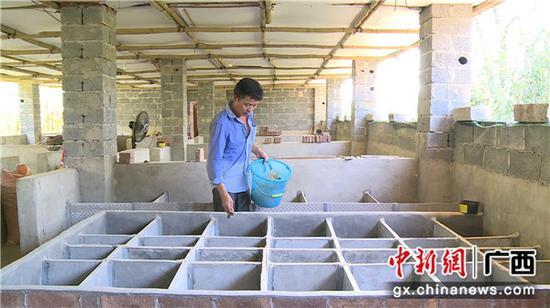 养殖户韦善邦用加工好的竹片喂养竹鼠。