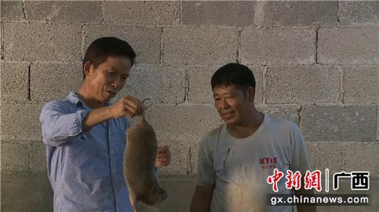 广西鹿寨县导江乡发展竹鼠产业开辟脱贫致富新路