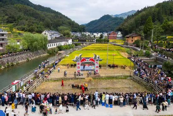 浙江龙泉:红绿融合促发展 小山村里农收忙