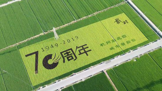 """杭州萧山戴村生态稻田呈现巨幅""""庆祝新中国成立70周年""""的稻田画。  沈科 摄"""