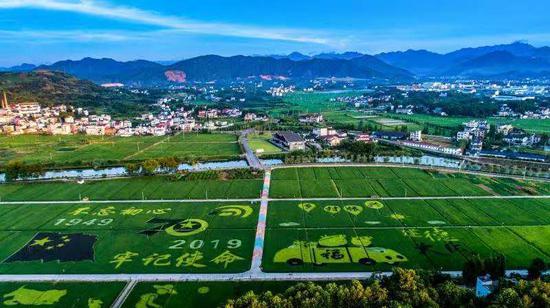 杭州余杭的稻田画。  王刚 摄