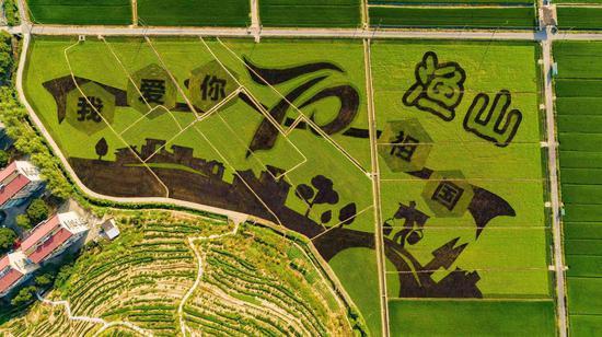 """杭州市富阳区渔山乡的""""我爱你祖国""""稻田画。  金飞 摄"""
