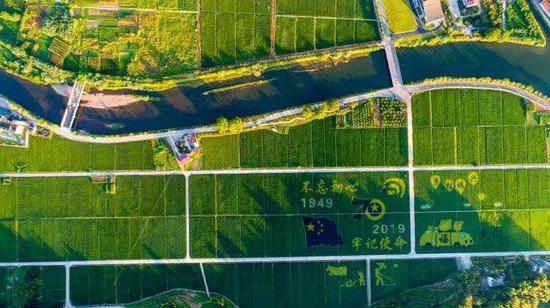 """杭州建德的""""彩色稻田""""。  建宣 摄"""