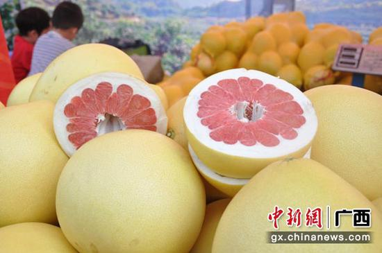 图为环江红心香柚。张林霞 摄