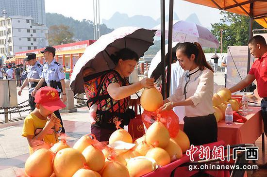 图为群众购买环江红心香柚。张林霞 摄