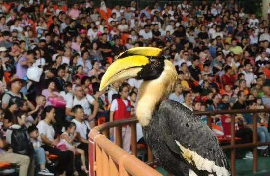 杭州野生动物世界。 富宣