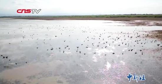 玛纳斯湿地迎大批迁徙候鸟 数量较往年增长近一倍