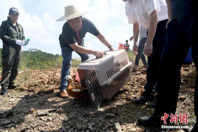天津与广西联合放归一批国家重点保护动物