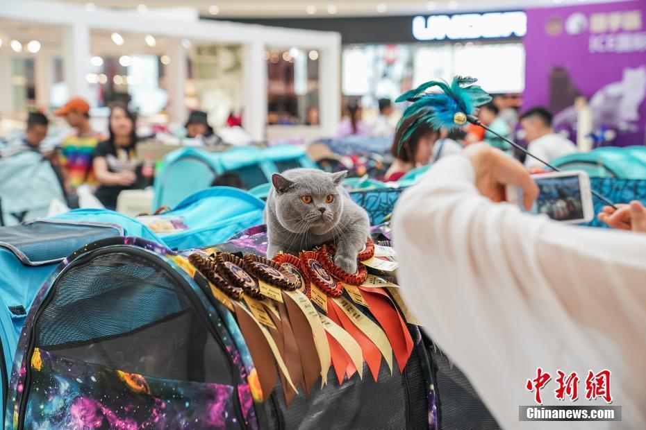 广西南宁一商场举行纯种猫选美比赛