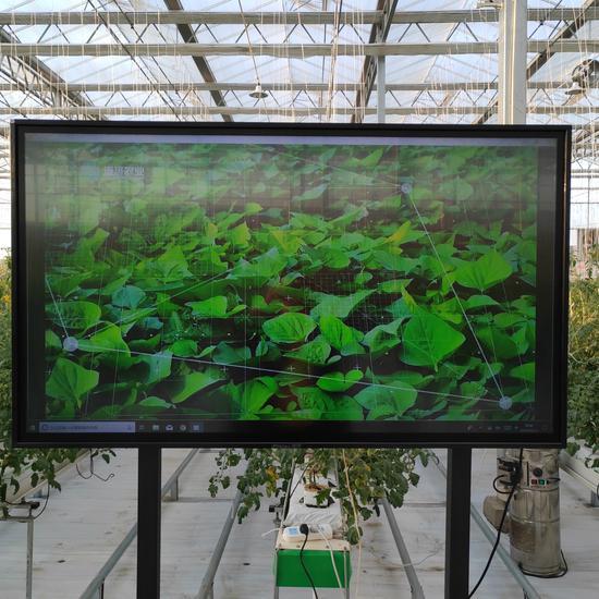 5G智慧农场内的智能显示屏。供图